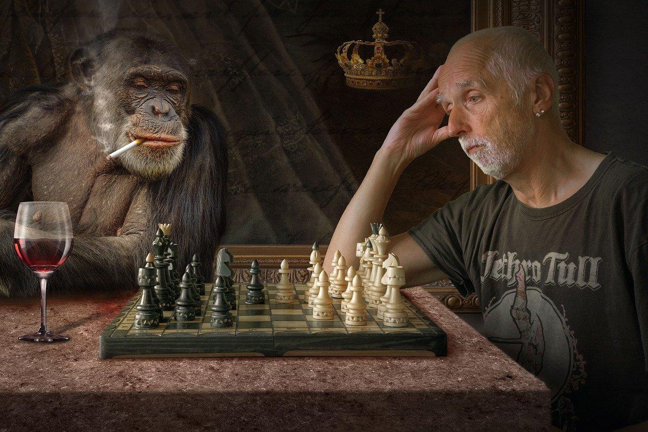 composing, monkey, photomontage